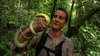 getlinkyoutube.com-Snake Bites Bear  - Born Survivor
