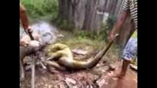getlinkyoutube.com-cobra atacando cachorro!!!