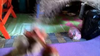 Cara pantas membuat jala udang
