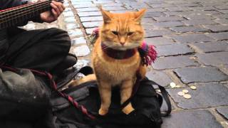 "getlinkyoutube.com-""A Street Cat Named Bob"" The Big Issue cat - iPhone 4s 1080p"