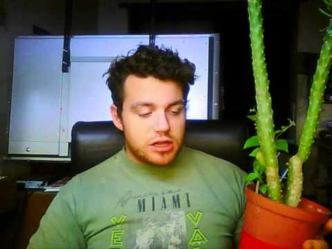 come fare innesti (piante)