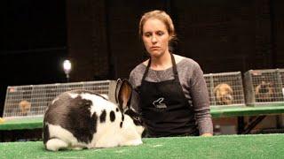getlinkyoutube.com-Ternak Kelinci Keren Abis .....! Kelincinya Cakep2 di Acara Kontes Kelinci