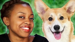 getlinkyoutube.com-What Dog Breeds Say About Their Owners