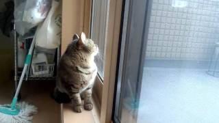 getlinkyoutube.com-雪に反応する猫