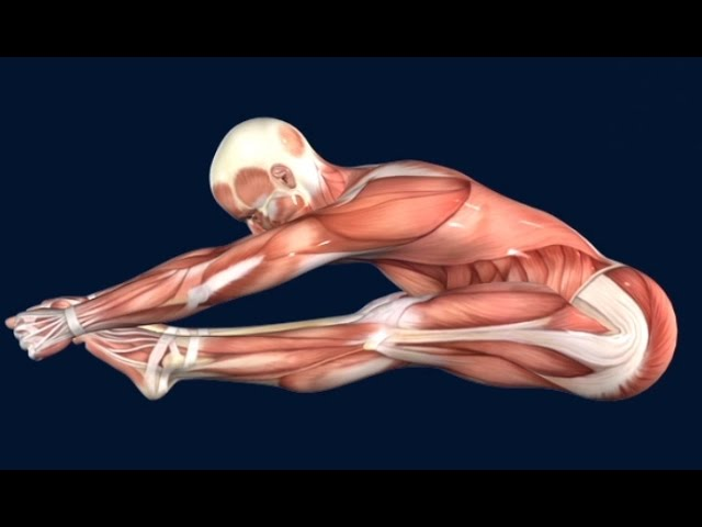 How to Pike Jump Muscle Anatomy EasyFlexibility
