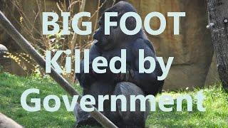 getlinkyoutube.com-Bigfoot Sasquatch Being Secretly Killed by Government