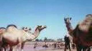 getlinkyoutube.com-Aduunyo Somali song Maxamed Mooge