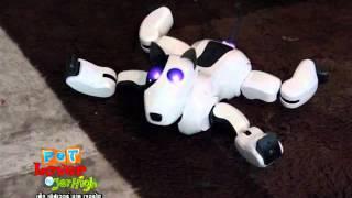 getlinkyoutube.com-Pet Lover by Jerhigh : หุ่นยนต์น้องหมา