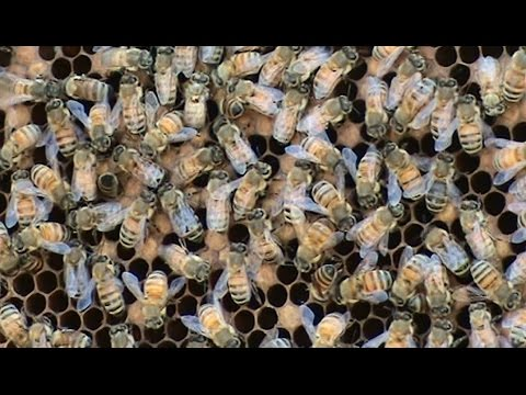 Beekeeping: A Feeder / Donor Hive.