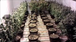 getlinkyoutube.com-8000 Watt FAK Flower Room Day 63 Harvest