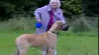 grandma gets pulled by big dog width=