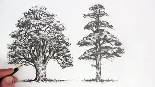 getlinkyoutube.com-How to Draw Trees