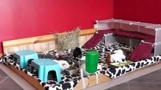 getlinkyoutube.com-Updated Guinea Pig Room Tour