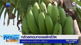 getlinkyoutube.com-เกษตรสร้างชาติ : กล้วยหอมทองพลิกชีวิต   สำนักข่าวไทย อสมท