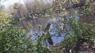 getlinkyoutube.com-Metal Detecting - 1800's Swimming hole