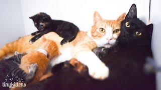 LIVE: Rescue kitten nursery!  TinyKittens.com