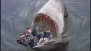 getlinkyoutube.com-<サメ-Shark080->メガロドン4
