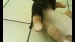 SEX DOG XXX