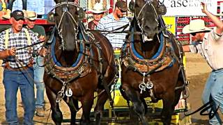 getlinkyoutube.com-Belgium and Clydesdale Heavy Draft Horse Pull - [HD]