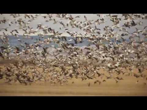 Duck and Goose Hunting by Cana Outdoors