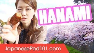 Cherry Blossoms In Japan: From Sakura To Hanami!