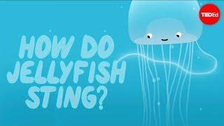 getlinkyoutube.com-How does a jellyfish sting? - Neosha S Kashef