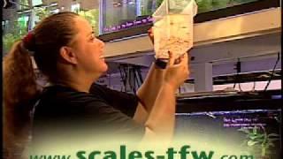 getlinkyoutube.com-SCALES Tropical Fish Warehouse: Quarantine Promo