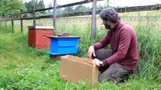 Bienen-Dokumentation Teil 12/ Ein neuer Ableger zieht ein