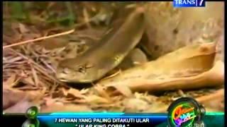 getlinkyoutube.com-7 hewan yg plg ditakuti ular