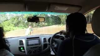 getlinkyoutube.com-Stuck in Manik river, 4x4 off roading Yala Block 2, Sri Lanka