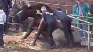 getlinkyoutube.com-Horse in Mud