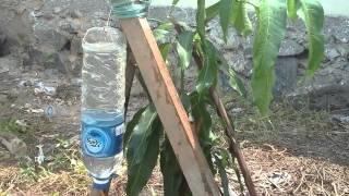 getlinkyoutube.com-Penyiraman otomatis tanaman