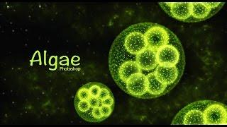 getlinkyoutube.com-Photoshop Tutorial | Algae | Aquatic plant design