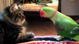 getlinkyoutube.com-Cat vs Parrot