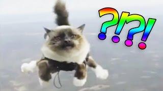 getlinkyoutube.com-GATO SKYDIVING?! | Videos Raros - lele