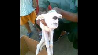 getlinkyoutube.com-Fotos de Animales deformes   奇形動物たちの写真 環境汚染・放射能