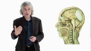 Steven Pinker: Linguistics as a Window to Understanding the Brain