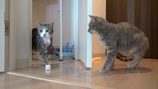getlinkyoutube.com-【モアクリ】 心配するネコ - Worried Cat -