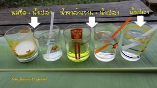getlinkyoutube.com-น้ำยาล้างจานและนมจืดใช้เป็นสารจับใบได้จริงหรือ..ไปพิสูจน์กัน