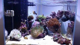 getlinkyoutube.com-Reef Tank Update # 6 New Ai Prime LED