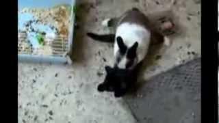 getlinkyoutube.com-MORRA DE RIR  - Gatos Engraçados
