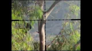getlinkyoutube.com-Crow Hunting 1