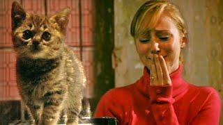 getlinkyoutube.com-Could You Kill A Kitten? - Derren Brown