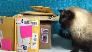 getlinkyoutube.com-Cinco De Mailo Fan Mail Time May 2015 Opening