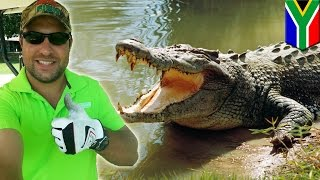 getlinkyoutube.com-Crocodile attacks golfer hunting for golf balls in South Africa's Kruger National Park