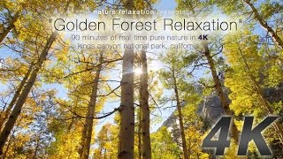 """getlinkyoutube.com-90 Minute 4K Nature Experience: """"Golden Forest Relaxation"""" by David Huting"""