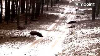 getlinkyoutube.com-Aimpoint Trailer: Wild Boar Fever 4