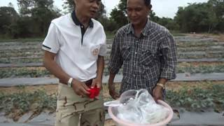 getlinkyoutube.com-การปลูกแตงโมเมล็ด (Part 2)