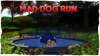 Cânele slobod | Mad Dog Run