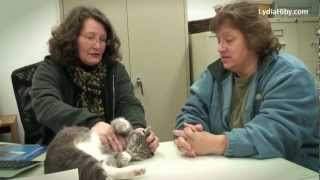 getlinkyoutube.com-LYDIA HIBY, Animal Communicator: Gershwin the Cat